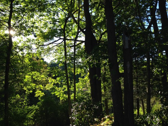 Enchanted Forest Maine